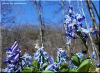 春の香り 2(滝野公園) - 北海道photo一撮り旅