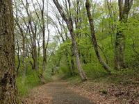 春の野山でスケッチを…その1 - 自然がいっぱい4は終了しました。