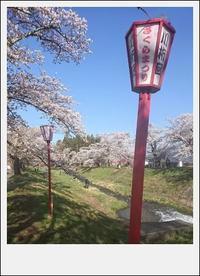 猪苗代観音寺川の桜 - khh style