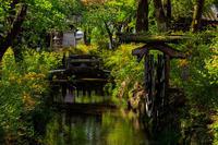 山吹の社(松尾大社) - 花景色-K.W.C. PhotoBlog