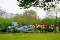 偕楽園公園で - ぶらり散歩 ~四季折々フォト日記~