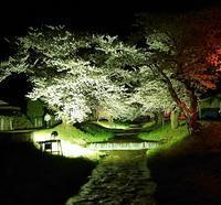 桜~4 - Fabulous days*