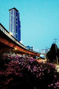 GW2019 ソウルはとっても良い季節でした - Good Morning, Gorgeous.