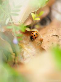 春は足元 - M2_pictlog