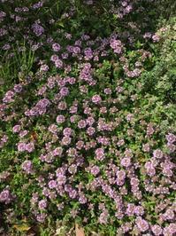 庭の花たち〜初夏の香り〜 - CROSSE 便り