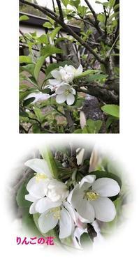 春の木古里の白い花 - ワ-クスペ-ス木古里 就労継続支援B型事業所