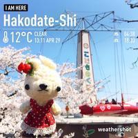 [ぬい撮り] 函館公園の桜とあみぐるみうさぎさん♪ - Smiling * Photo & Handmade 2 動物のあみぐるみ・レジンアクセサリー・風景写真のポストカード