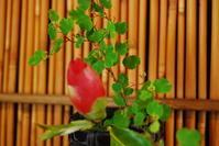 花寄せ - 懐石椿亭 公式weblog日本料理