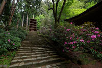 初夏の花巡り・石楠花@室生寺其の二 - デジタルな鍛冶屋の写真歩記