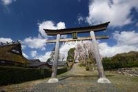 桜巡り2019@京北八幡宮社 - デジタルな鍛冶屋の写真歩記