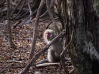 モフモフの冬毛を纏った野猿の群れに遭遇(;'∀')・・・平成最後の更新は奥日光中禅寺湖での事件簿♪ - 『私のデジタル写真眼』