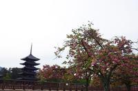 興福寺で八重桜を見た(2019/04/28) - ほんじつのおすすめ