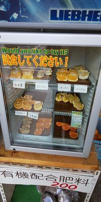 大好きな柑橘 - 料理研究家ブログ行長万里  日本全国 美味しい話