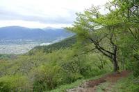 21年ぶりに房総半島鋸山に登るその10 - 季節(いま)を求めて
