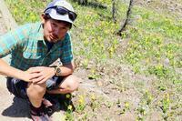 カナディアンロッキー 夏のハイキングシーズン到来間近!高山植物の魅力と種類を大特集します。 - ヤムナスカ Blog