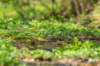 小鳥たちの水浴び場 - ひとり野鳥の会