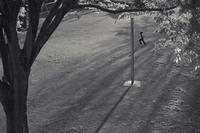 夕方の散歩(5丁目cut)近所の公園 -     ~風に乗って~    Present