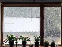 クレイジーな雪と陽4月19日~24日 - f's note ak