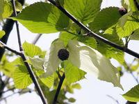 晩春の花 - しらこばとWeblog