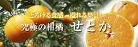 母の日ギフト2019至高の最旬フルーツをお届けしませんか?第4弾!:数量限定!究極の柑橘『せとか』 - FLCパートナーズストア