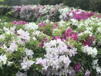 平成最後のお花たち - やわらかな風の吹く場所に:母乳育児を応援