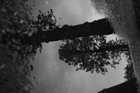 reflection after the rain - S w a m p y D o g - my laidback life