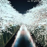 サンマよりサクラの季節が到来中目黒川夜桜紀行19.04.03 19:08 - スナップ寅さんの「日々是口実」