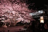 弘前城にて - Aruku