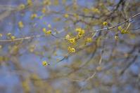 Yellow - ∞ infinity ∞