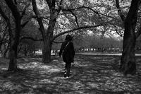 木漏れ日の時間 - Yoshi-A の写真の楽しみ