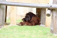 よこはま動物園ズーラシア2019年4月24日その1 - お散歩ふぉと2