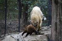 よこはま動物園ズーラシア2019年4月24日その2 - お散歩ふぉと2