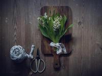 5月1日令和がスタート!そしてすずらんの日でもあります。 - きれいの瞬間~写真で伝えるstory~