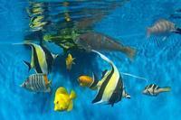葛西臨海水族園:「小笠原の海1」③~食事の時間、アカハチハゼは砂を吐く - 続々・動物園ありマス。