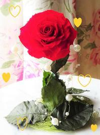 🌹令和の薔薇🌹 - 軽井沢プリフラdiary