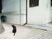 モスクと猫 - モルディブ現地情報発信ブログ 手軽に気軽に賢く旅するローカル島旅!