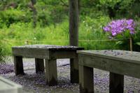 今日の向島百花園フジシランオキナグサミヤコワセレツツジ - みるはな写真くらぶ