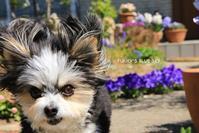 春の庭で♪ - FUNKY'S BLUE SKY