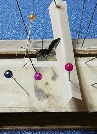 第五作「モンシロチョウの交尾拒否」の材料作り - むしジオラマ