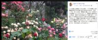 ロバートキャンベル先生とのご縁 - 駒場バラ会咲く咲く日誌