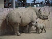 茨城かみね動物園のクロサイ・マキの死 - ごきげんよう 犀たち