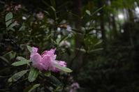石楠花の小径 - ぽとすのくずかご