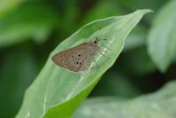 3年ぶりの与那国・石垣 -4- - 蝶と蜻蛉の撮影日記