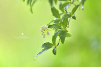 雨 - お花びより