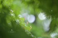 すてきな雨を - お花びより