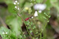 花 と 虫(3) - 野山の住認たち Ⅲ