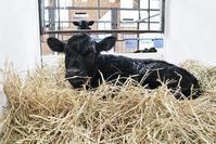 誕生!令和第1号 - 小比類巻家畜診療サービス スタッフの牧場日誌