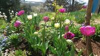 5月2日の庭とポタジェ - 今から・花
