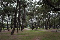 『舞子公園』の松林でピクニック - 写真酒