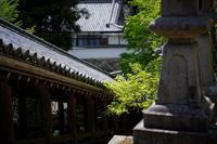 初夏の花巡り・牡丹@長谷寺其の二 - デジタルな鍛冶屋の写真歩記